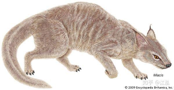 Hình ảnh phục hồi của loài mèo tiền sử - Miacis Latour.