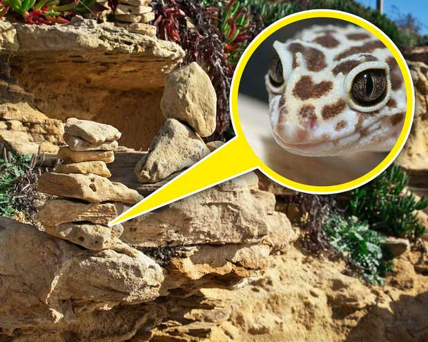 """Khi lấy đá xếp chồng lên nhau, bạn đã vô tình dỡ bỏ """"mái nhà"""" của nhiều loài vật khác."""