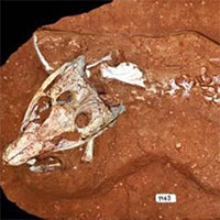 """Các nhà cổ sinh vật học phát hiện ra loài bò sát """"lắm mồm"""" nhất kỷ Phấn trắng"""
