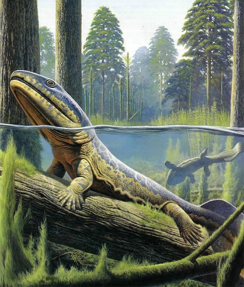 Acanthostega có rất nhiều đặc điểm giống lưỡng cư thời kỳ đầu tiên.