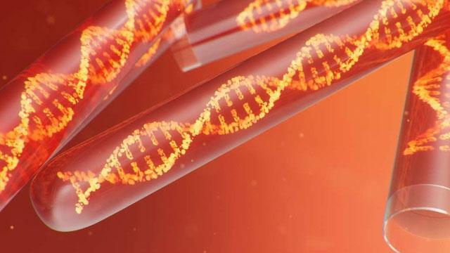 Bộ gene này có niên đại lâu hơn 10 năm so với bất kỳ khám phá nào có thể so sánh được.