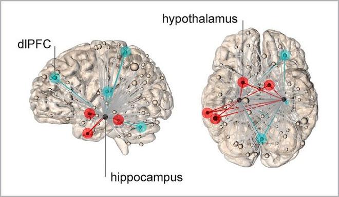 Mạng lưới thần kinh phát ra từ hồi hải mã.