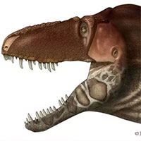 """Khủng long bạo chúa Tyrannosaurus dựa vào giác quan thứ sáu để """"yêu""""?"""
