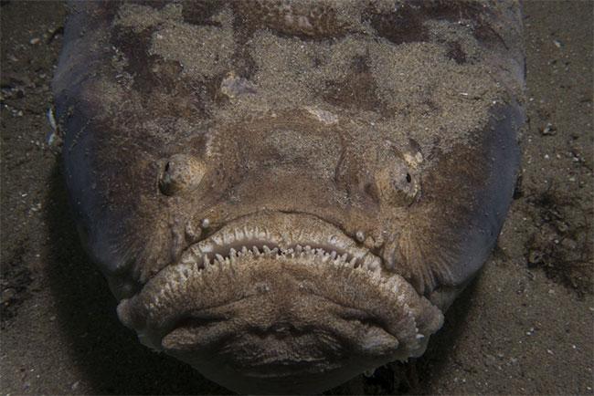 Con cá kinh dị lộ nguyên hình ghê rợn.