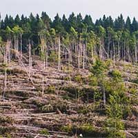 Biến đổi khí hậu khiến cây xanh ngày càng lùn hơn và trẻ hơn