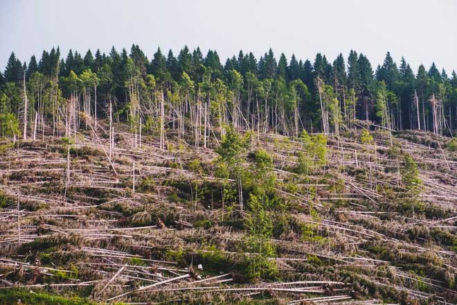 Thế giới đang mất đi rất nhiều cây cao tuổi.