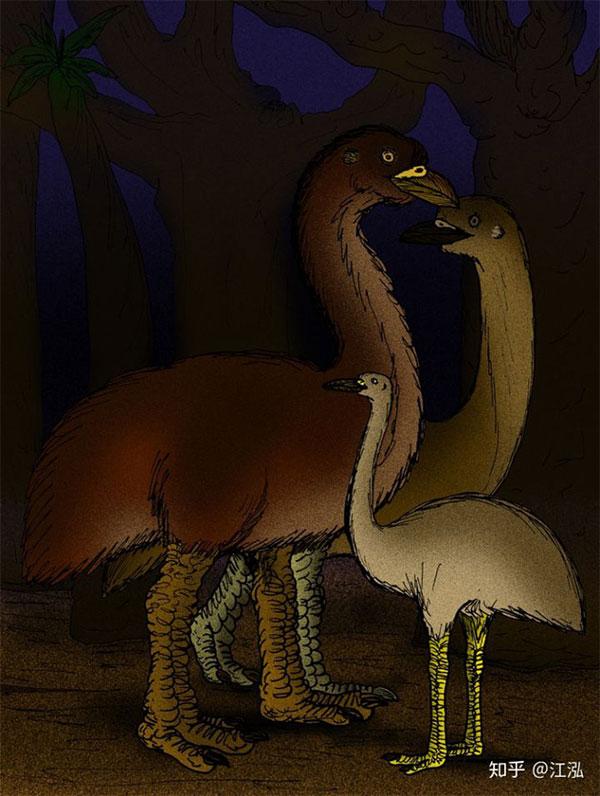 Những con chim khổng lồ Vorombe titan không thể chạy nhanh và giữ cơ thể cân bằng ổn định...