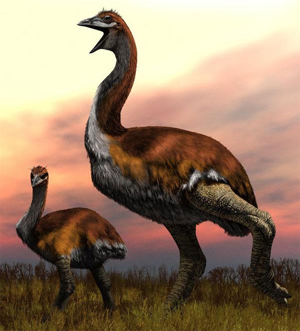 Vorombe đã phải chịu số phận tuyệt chủng vào khoảng 1.000 năm trước.
