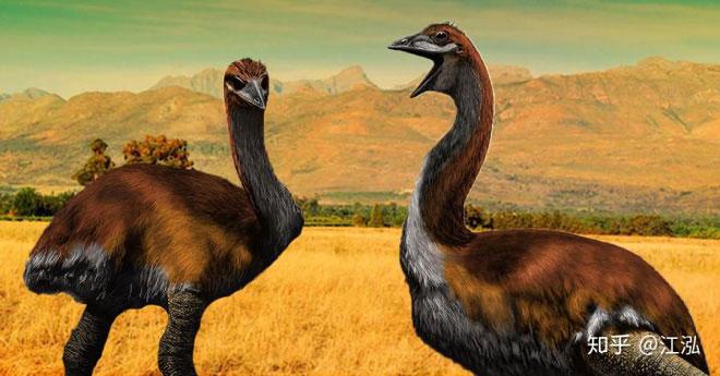 Vorombe là một trong ba giống chim voi, một họ loài chim chạy to lớn đã tuyệt chủng đặc hữu ở Madagascar.