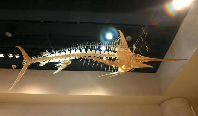 Cấu trúc xương của cá.