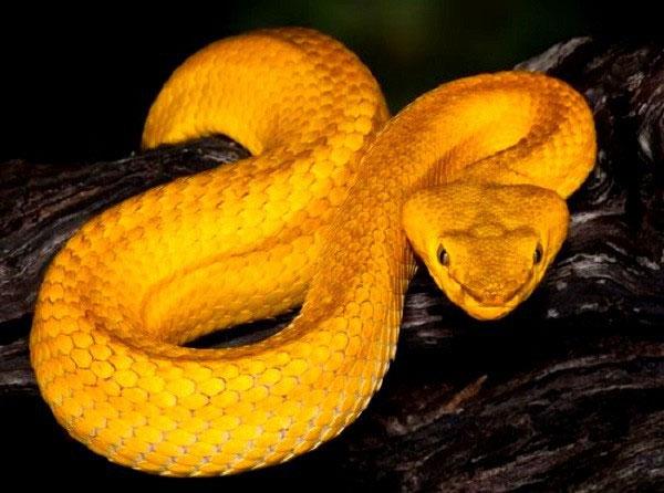 Đảo rắn Ilha da Queimada