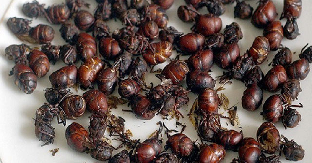 Big butt ant dish - irresistibly delicious specialties of Colombia
