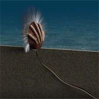 Bằng chứng hóa thạch về mối quan hệ ký sinh - vật chủ