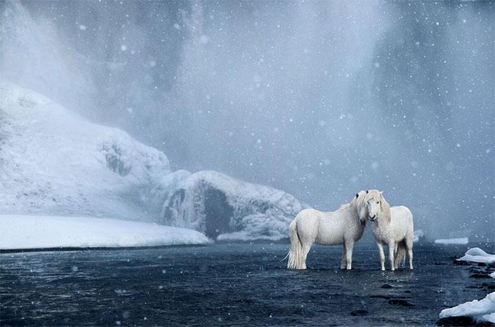 """hững con ngựa trắng trong làn nước """"pha lê""""."""