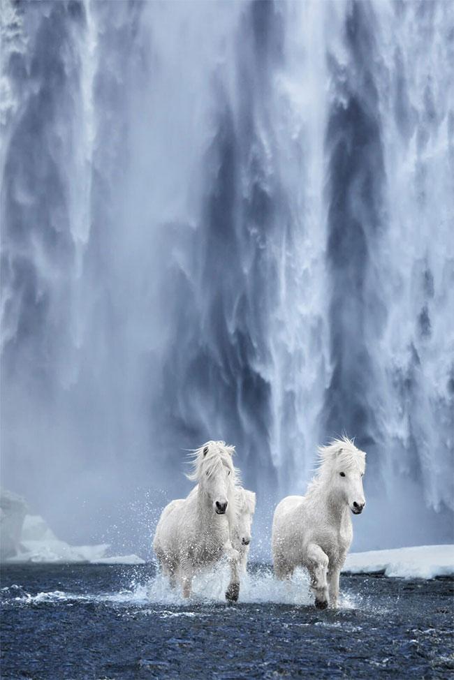 Những con ngựa hoang mang đến khung cảnh ngoạn mục không thể nào quên
