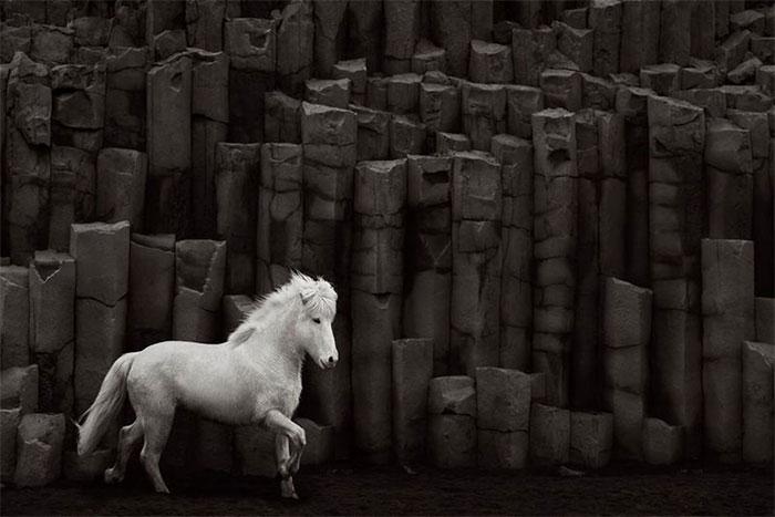 Vẻ đẹp đối lập của ngựa trắng với những khối đá đen hình thành từ núi lửa.