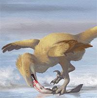 Các nhà khoa học phát hiện ra bí mật giúp loài chim thoát khỏi sự tuyệt chủng hàng loạt