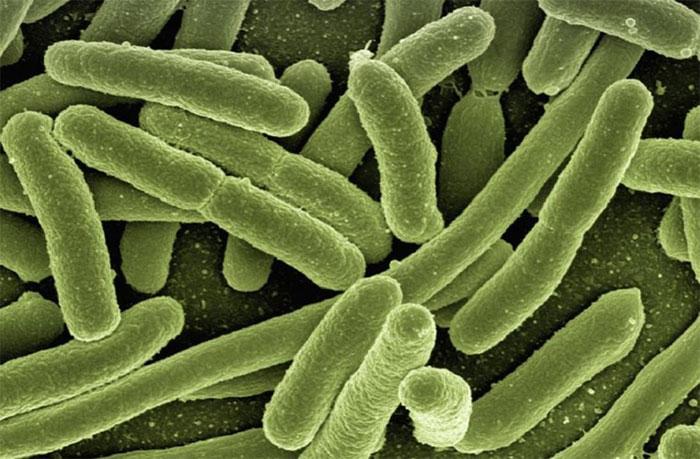 Hầu hết các vi khuẩn có khả năng tự sát để thực hiện tấn công tổng lực kẻ thù.