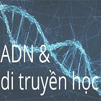ADN và gene trong di truyền học