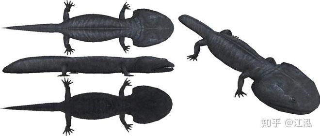 Koolasuchus là 1 trong những đại diện cuối cùng còn sót lại của chi Temnospondyli