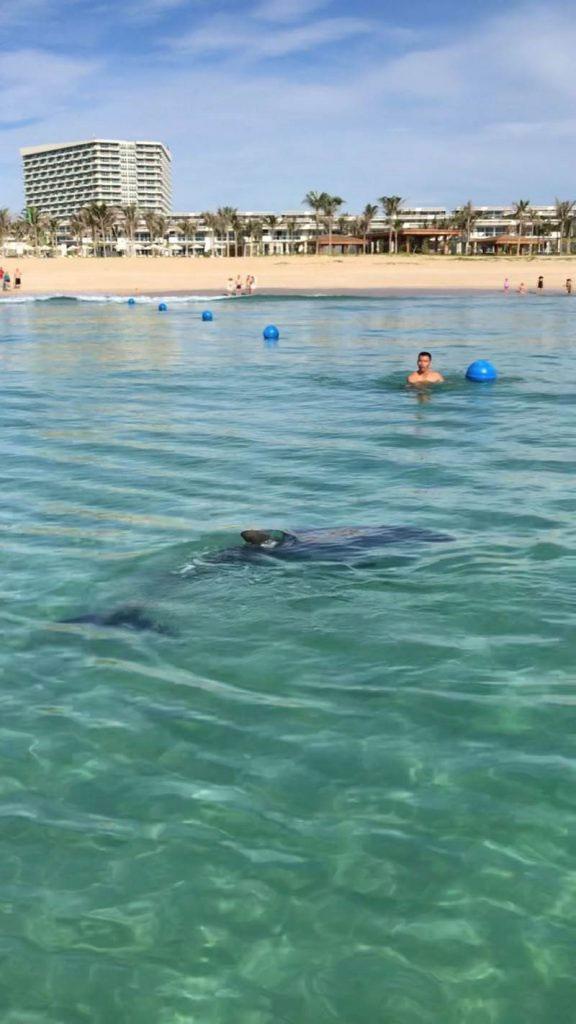Chú cá heo không hề tỏ ra sợ hãi khi đến gần người.