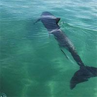Cá heo xuất hiện gần bờ biển Cam Ranh trên báo Livetradingnews
