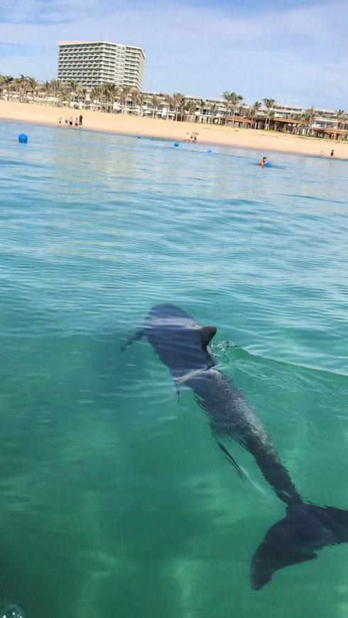 Cá heo xuất hiện ở Cam Ranh, Khánh Hòa