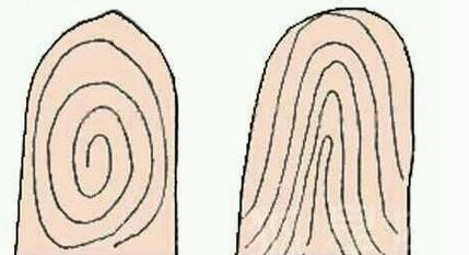Người xưa chia vân tay thành 2 dạng: Xoắn ốc (trái) và đường cong.