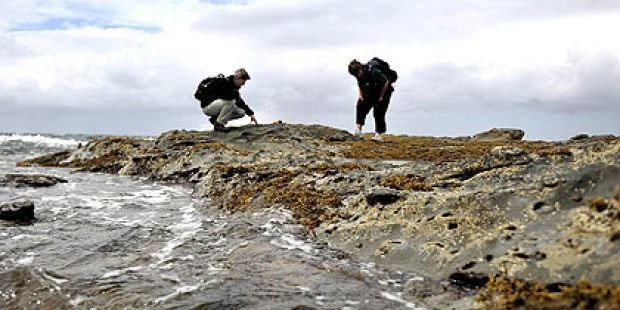 Các nhà cổ sinh vật học đang khai quật hóa thạch ở Victoria.