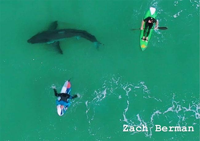 Nhận ra mối đe doạ nguy hiểm, nhóm người lướt sóng và chèo thuyền nhanh chóng di chuyển vào bờ.