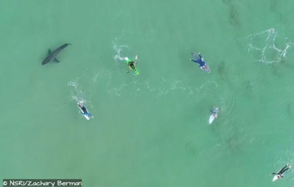 Nhóm lướt sóng và chèo thuyền may mắn thoát hiểm trong gang tấc.