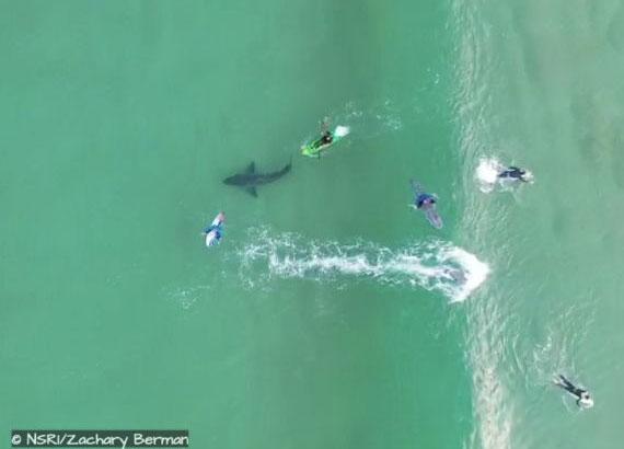 Người chèo thuyền Kayak suýt đâm phải đuôi con cá mập.