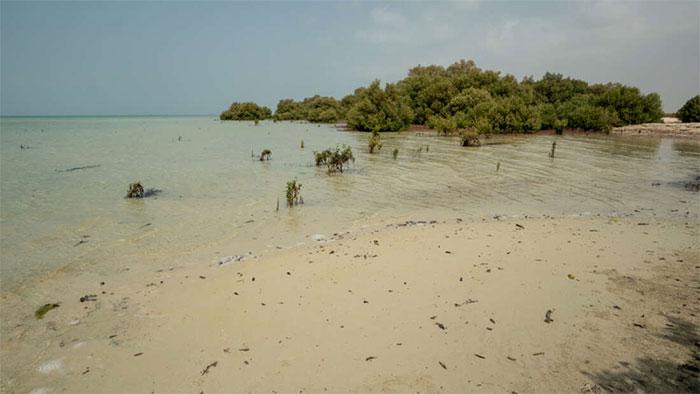 Rừng ngập mặn trên quần đảo Farasan hoang sơ ở Jizan, Ả Rập Saudi.