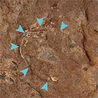 Phát hiện hóa thạch trứng khủng long nhỏ nhất thế giới