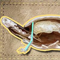 Đây là những gì có bên trong chiếc mai của một con rùa và đảm bảo bạn sẽ rất kinh ngạc