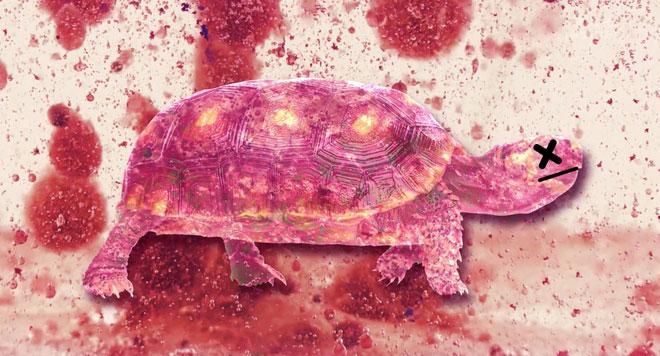 Công dụng chính của mai rùa ngày nay thì vẫn là để bảo vệ chúng khỏi những kẻ săn mồi.