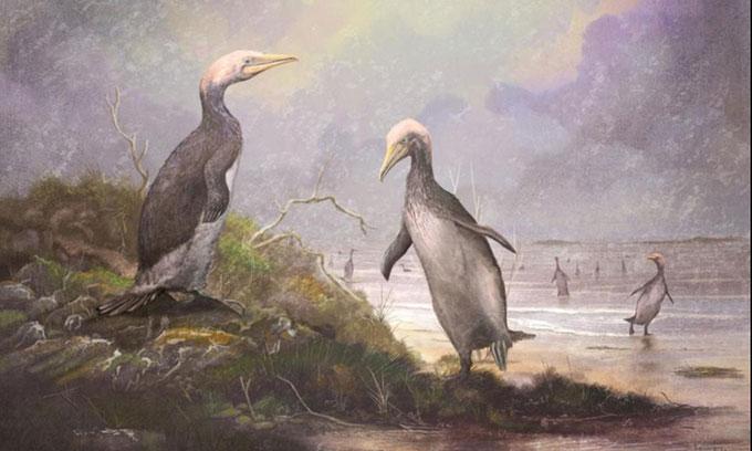 Hình ảnh phục dựng một loài Plotopteridae.