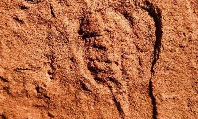 Hóa thạch động vật chân khớp 460 triệu năm tuổi.