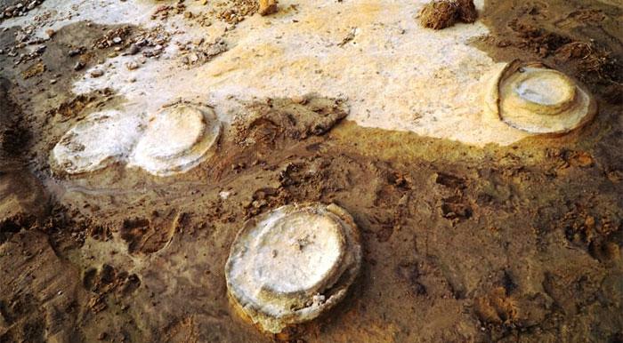 Các hóa thạch Cúc đá được tìm thấy tại Gia Lai.