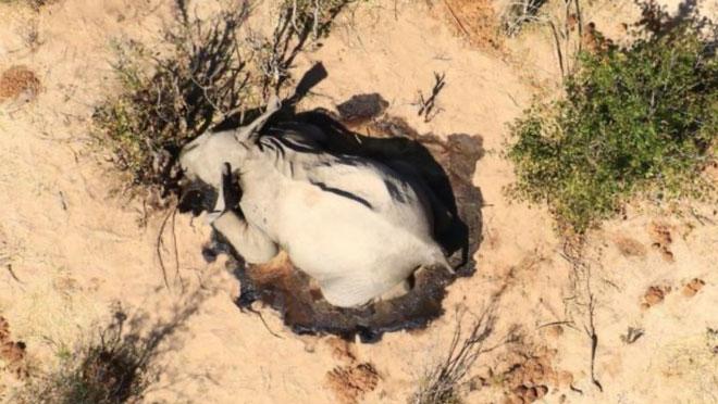 Những con voi đã chết không có sự phân loại, trải rộng trên mọi độ tuổi và ở cả 2 giới tính.
