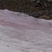 Hiện tượng kỳ lạ: Tuyết hồng bao phủ sông băng dãy Alps