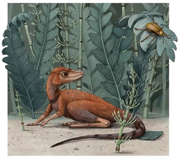 Kongonaphon kely chủ yếu ăn côn trùng và động vật không xương sống nhỏ