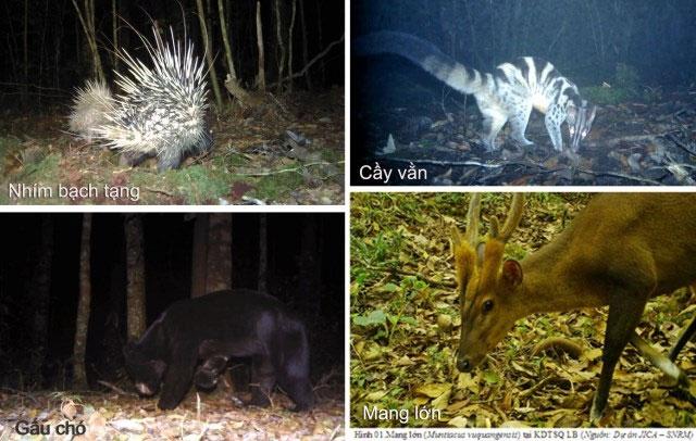 Các loài thú quý hiếm ghi nhận qua bẫy ảnh tại VQG Bidoup - Núi Bà.