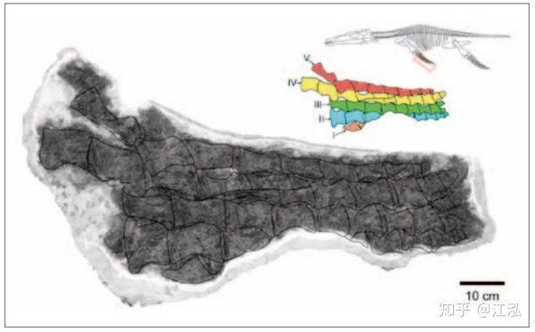 Mẫu hóa thạch vây của loài cổ sinh vật được phát hiện trên đảo Spitsbergen.