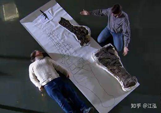 Phục hồi hóa thạch cho thấy vây của chúng còn to và dài hơn cả kích thước của một người trưởng thành.
