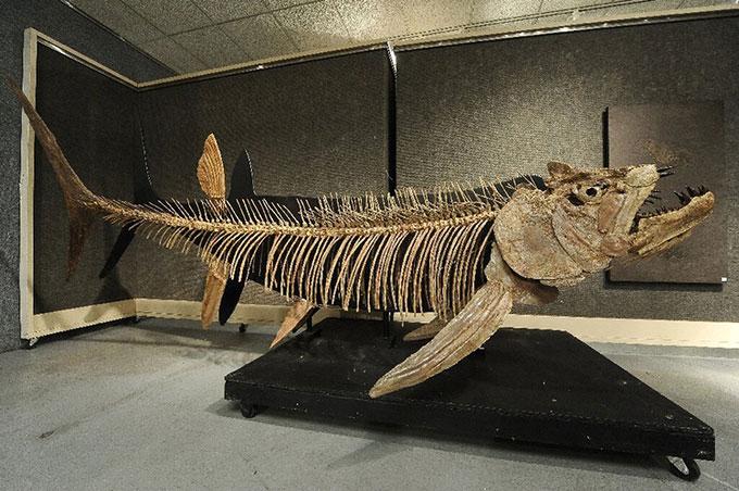 Một hóa thạch cá xương hoàn chỉnh, tương tự loài được tìm thấy ở Argentina.