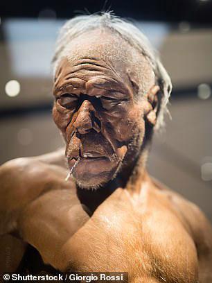 Cận cảnh một ông lão Homo erectus lực lưỡng