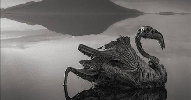 """Bí ẩn hồ tử thần Natron làm sinh vật biến thành """"tượng sống"""""""