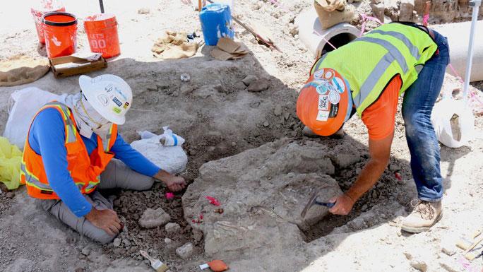 """Các nhà cổ sinh vật học đã tiếp quản hiện trường khi dự án xây dựng hóa cuộc khai quật """"quái thú"""""""