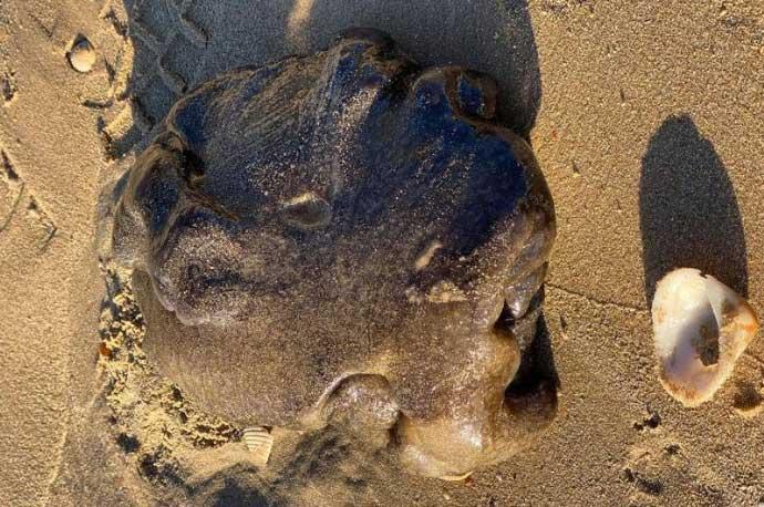 Hình ảnh vật thể kì lạ được cho là long diên hương trên bãi biển ở Úc.